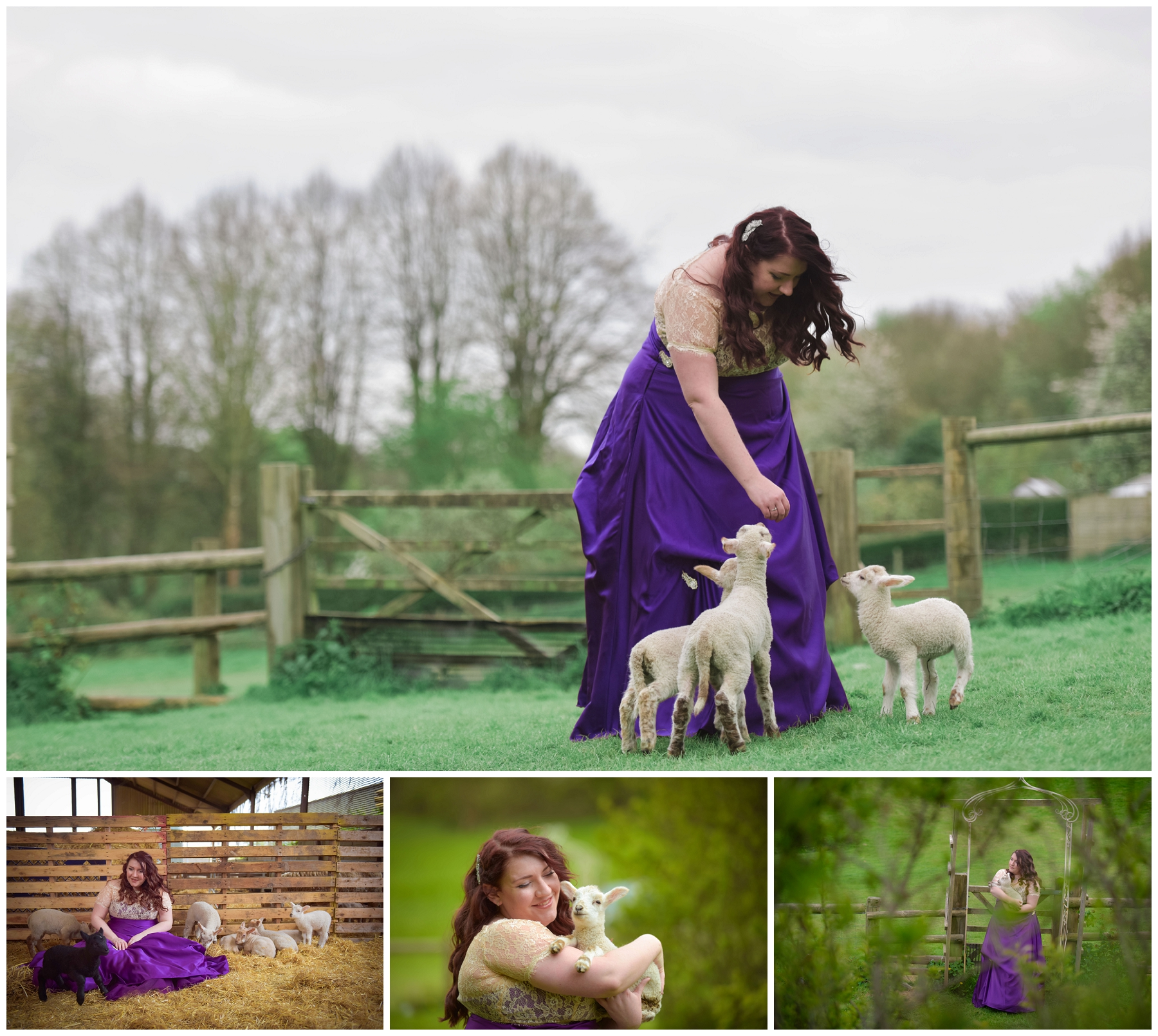 rock the frock in a purple wedding dress with lambs